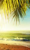 Shutterstock_116482654